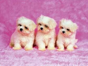 Download Cute Dogs Wallpaper 1152x864 pixel Animal HD Wallpaper