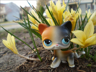 LPS Calico Flowers Wallpaper by Messybun