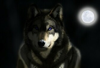 Grey wolf wallpaper Wallpaper Corners