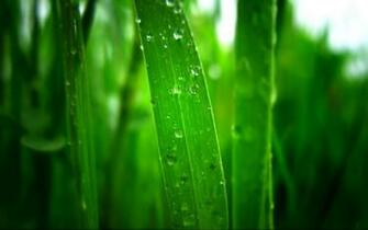 tag morning dew paographs wallpapers images and pictures for