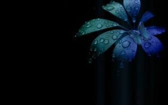 Blue Butterfly Wallpaper 8909 Hd Wallpapers in Cute   Imagescicom