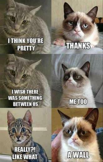grumpy cat meme lol funny pictures jpg MEMEs