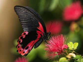 HD Wallpapers PC wallpapers Nature wallpapers HD butterfly
