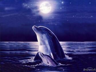 Dolphin Wallpaper 10760 Hd Wallpapers in Animals   Imagescicom