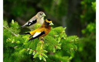 712611  wallpaper branch birds bird pjpg