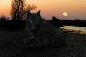 Black Alpha Wolf Wallpaper Black wolf wallpaper