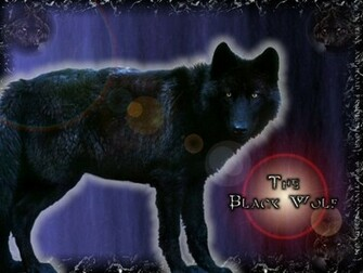 black wolf   Black Wolves Wallpaper 21617970