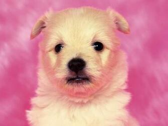 Cute Puppy Dog Wallpaper Wallpaper ME