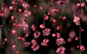 spring wallpaper widescreen   Wallpapers