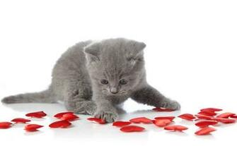 Caturday with these Valentines Day Kittens   Cats vs Cancer