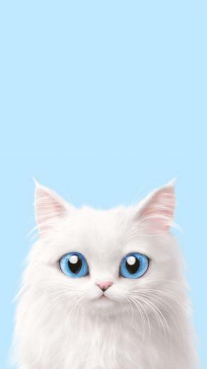 Cute Korean Cat Wallpapers   Top Cute Korean Cat Backgrounds