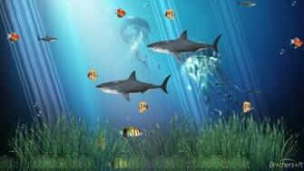Download Coral Reef Aquarium Animated Wallpaper Coral Reef