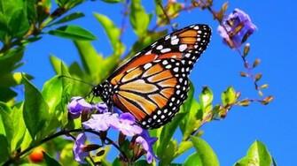 Spring Flower Wallpaper Butterflies 14679 Wallpaper Wallpaper hd