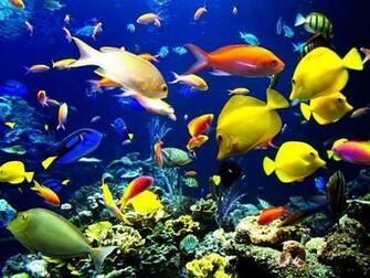 Android Live Wallpaper live fish wallpaper