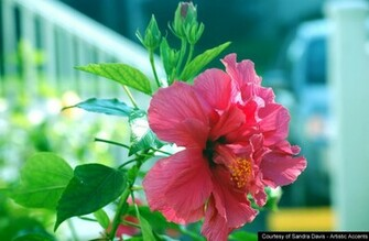 All photos gallery flower wallpaper flowers wallpaper