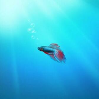 stylistic beta fish ipad wallpaper