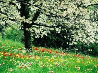 Spring Flowers HD dekstop wallpapers   Beautiful Spring Flowers