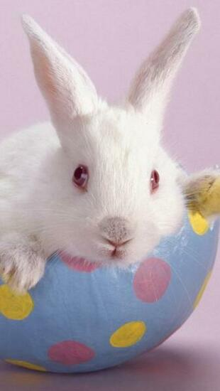 Download Cute Easter Bunny iPhone 5 HD Wallpapers