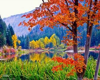 Fall Foliage Washington