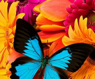 Download Animated Colorful Butterfly Wallpapers   Bitterroot