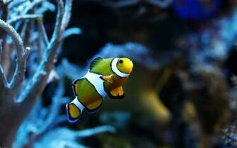 Fish Wallpaper High Quality 10728 Wallpaper Cool Walldiskpapercom