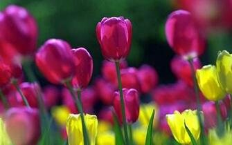 wallpapers Spring Flowers Wallpapers