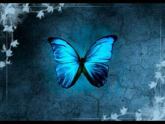 Blue Butterfly Backgrounds wallpaper Blue Butterfly Backgrounds hd