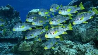 Fish Wallpaper Undersea 10741 Wallpaper Cool Walldiskpapercom