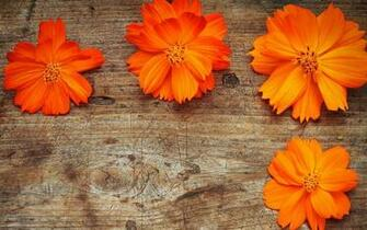 Orange Flowers Wallpaper HD Pictures One HD Wallpaper