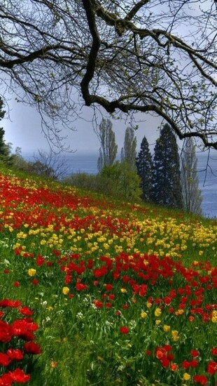 Download Spring Flower 2013 iPhone 5 HD Wallpapers HD