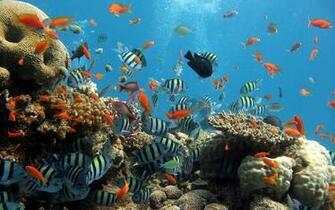 wallpapers Ocean Life Wallpapers