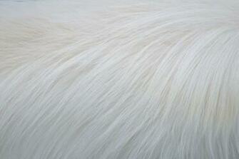 White Fur Background White Fur Texture