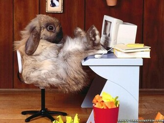 Funny Animal Wallpapers Top HD Wallpapers