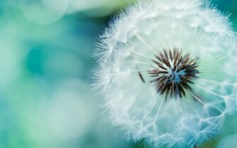 BEAUTIFUL FLOWER HD WALLPAPER Top HD Wallpapers