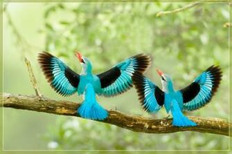 images of beautiful birds Beautiful Birds Wallpapers Birds