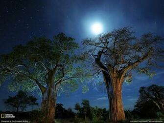 Photo Tanzania Wallpaper National Geographic Photo of the Day