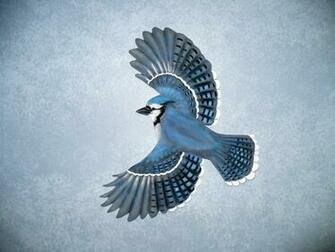 Cool Wallpapers blue jay wallpapers