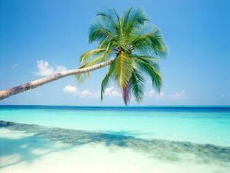 Pics Photos   Palm Trees Desktop Wallpaper