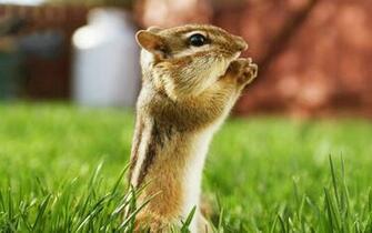 Cute Animals Wallpaper HD For Desktop Download Wallpaper Area