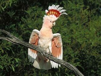 beautiful birds images Beautiful Bird in the World Long HD