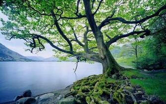 Beautiful Tree and River desktop wallpaper