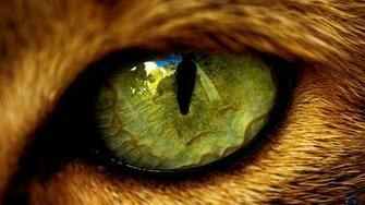 Cats Eye   Cats Wallpaper