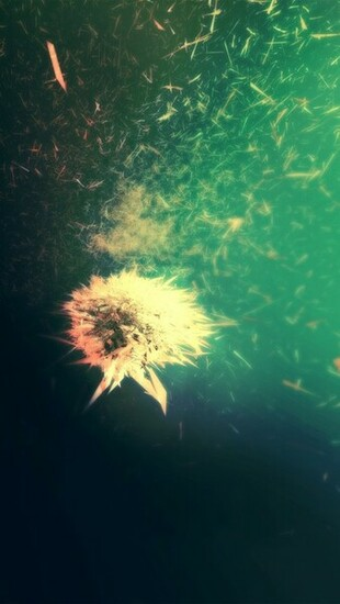 Blowing Dandelion Wallpaper   iPhone Wallpapers