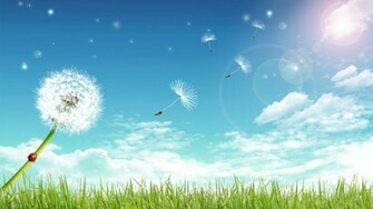 dandelion Grass photo Sky sun clouds download wallpapers for