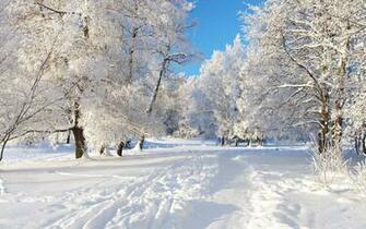 Winter Desktop Backgrounds