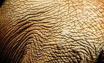 3607x2182px Elephant Skin Wallpaper