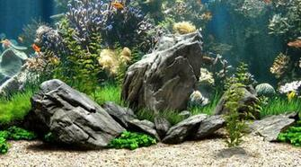 home cool fish tanks cool fish tanks hd wallpaper Quotes