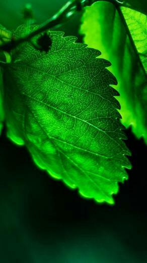 Nature Flower Leaf Tree iPhone Wallpapers   Best Iphone Wallpapers