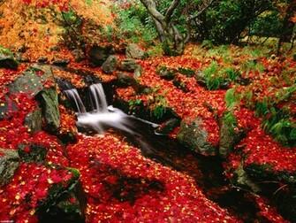 free fall desktop wallpaper downloads   wwwwallpapers in hdcom