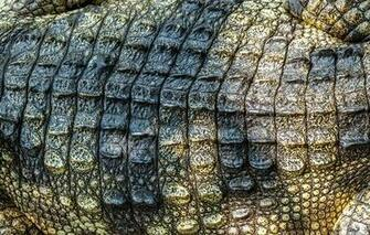 Crocodile skin leather texture crocodile skin wallpapers photos